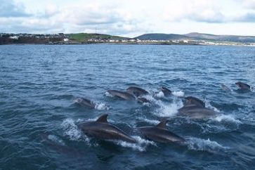 Dolphins_in_the_bay_c_visitisleofman.jpg