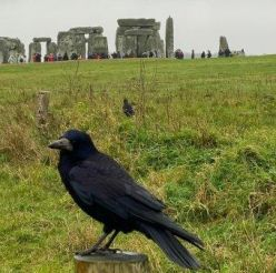 Crow_at_Stonehenge.jpg