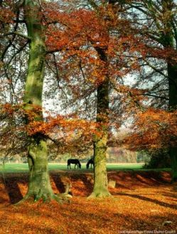 New_Forest_ponies_in_autumn_c_Visit_England-New_Forest_District_Council.jpg